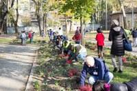 Ferrara, Regolamento per la gestione partecipata del verde