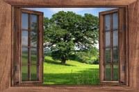 """""""Natura alla finestra"""", un progetto di scienza partecipata"""