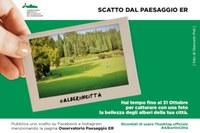 """#Alberiincittà: parte la nuova """"challenge"""" dell'Osservatorio regionale per la qualità del paesaggio"""