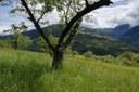 Il concorso fotografico Baumgart: tutti alla scoperta dei frutteti tradizionali dell'Alto Adige