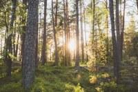 L'ordinamento forestale: prospettive di tutela e gestione sostenibile