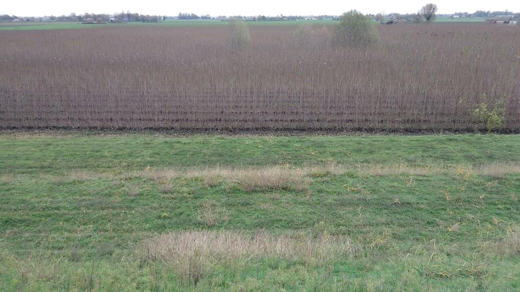 12_argine e paesaggio agricolo.jpg